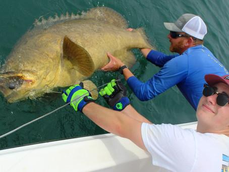BIG Fish Battle
