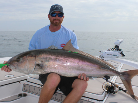 Greater Amber Jack