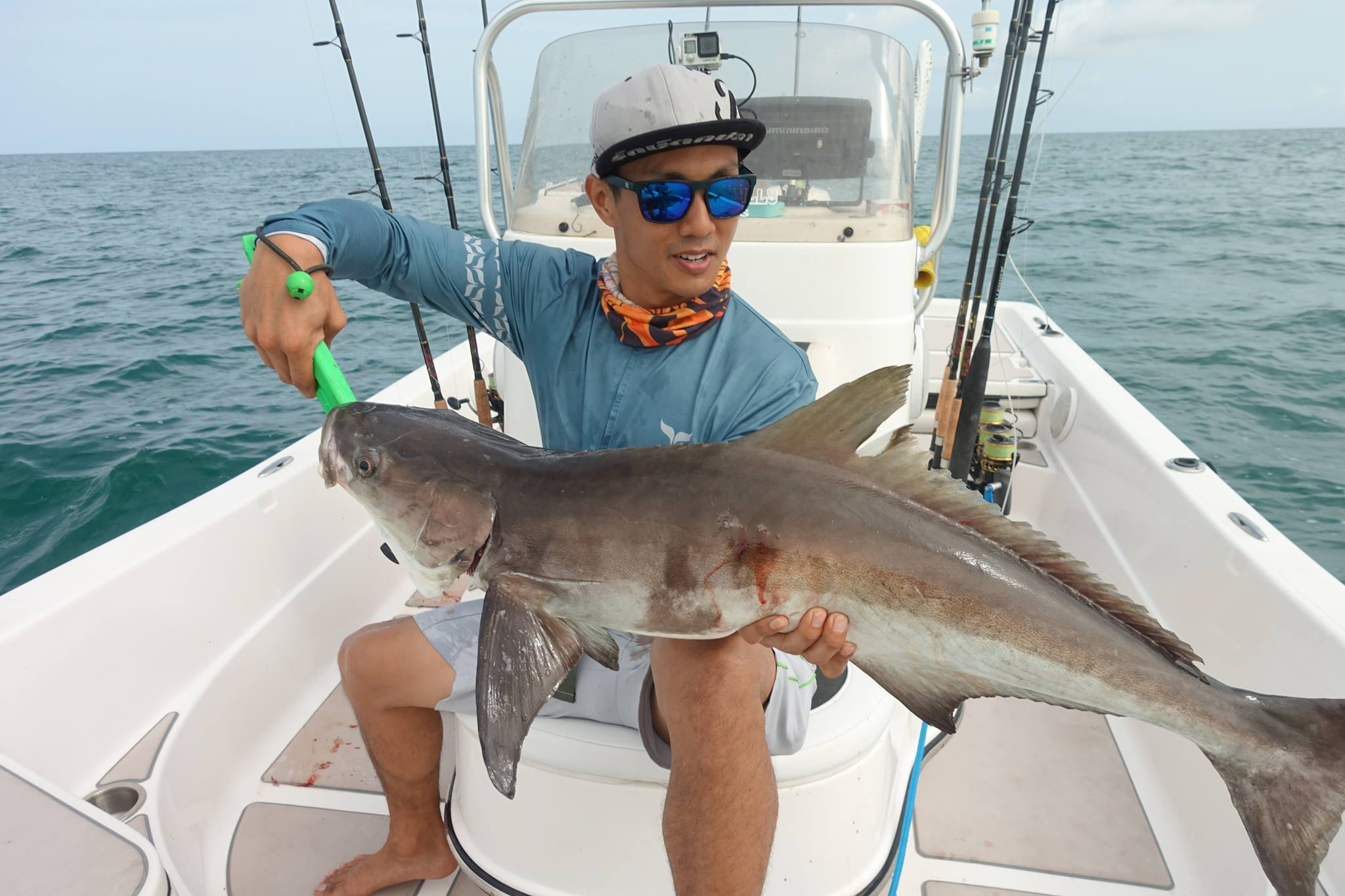 Cobia Fishing Florida