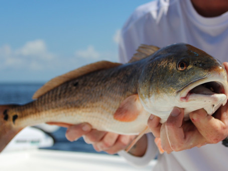 RED Hot August Fishing Report