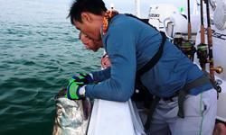 Tarpon fishing Oz
