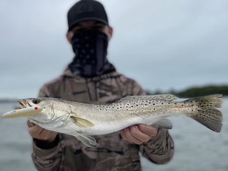 Fishy February