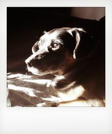 Ritratto del mio cane. Tutto il nucleo familiare, compresi gli animali, hanno avuto un ruolo terapeutico basilare. L' affetto, la presenza, costituiscono un elemento essenziale. ---- Portrait of my dog. All family members, including pets, have had a basic therapeutic role. Affection, presence, are an essential element.