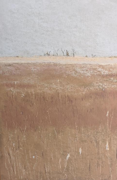 FOG ON THE MARSH