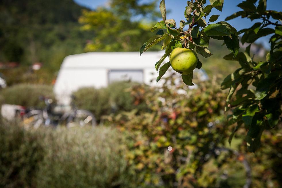 vue camping pomme.JPG