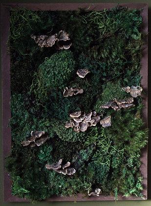 Large Moss Frame