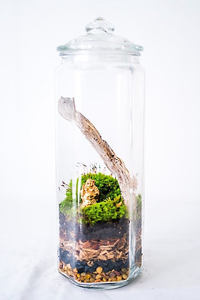 Enclosed Terrarium