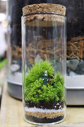 Mini Moss World