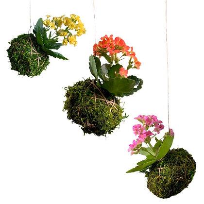 Flowering Trio