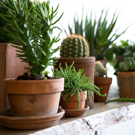 What's so great about houseplants?