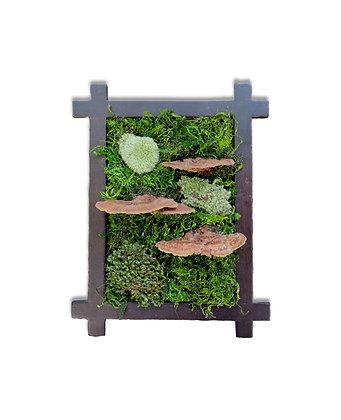 Zero Care Moss Frame (6x8)