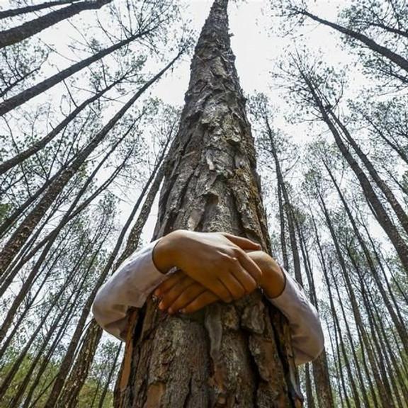 Hugging Tree Meditation