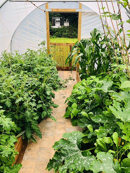 Arbor Green Nursery Polytunnel