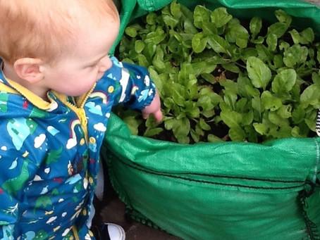 Grow Bags & Strawberry Plants