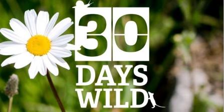 30 Days Wild Challenge