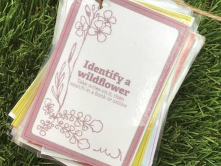 Identify A Wildflower