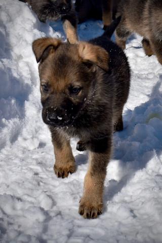 Puppy in winter