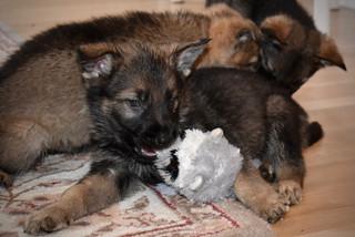 Puppy playtime