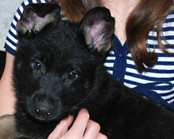 O_puppy_7weeks_01