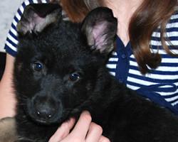 O_puppy_7weeks_01
