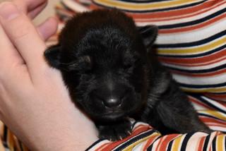 2019 Nov puppy Day 6 DSC_0274.jpg