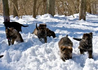 Snow puppies