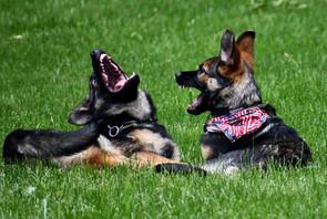 puppy_behavior_DSC_5874 (1).jpg