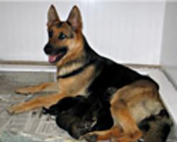heidi_puppies_oneday