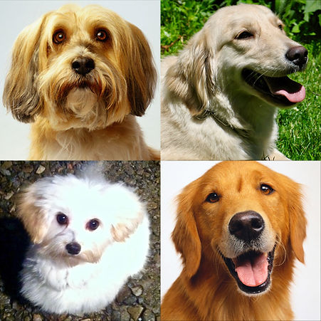 4-dogs-square-2.jpg