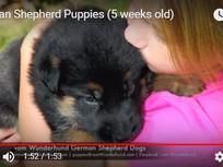 Early puppy development