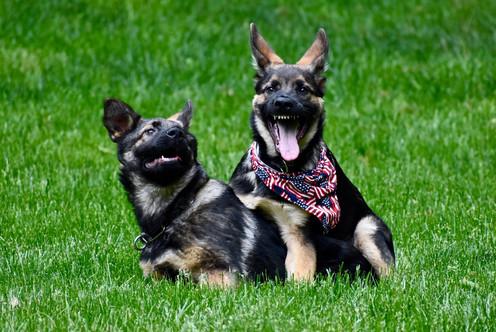puppy_behavior_DSC_5835.jpg