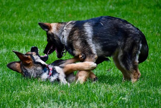 puppy_behavior_DSC_5823.jpg