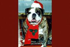 Marley-bulldog-l.jpg