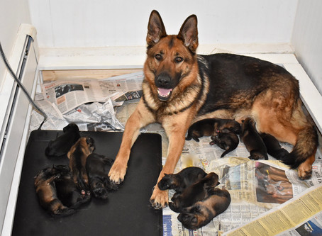 Raising Newborn Puppies: Keeping Warm
