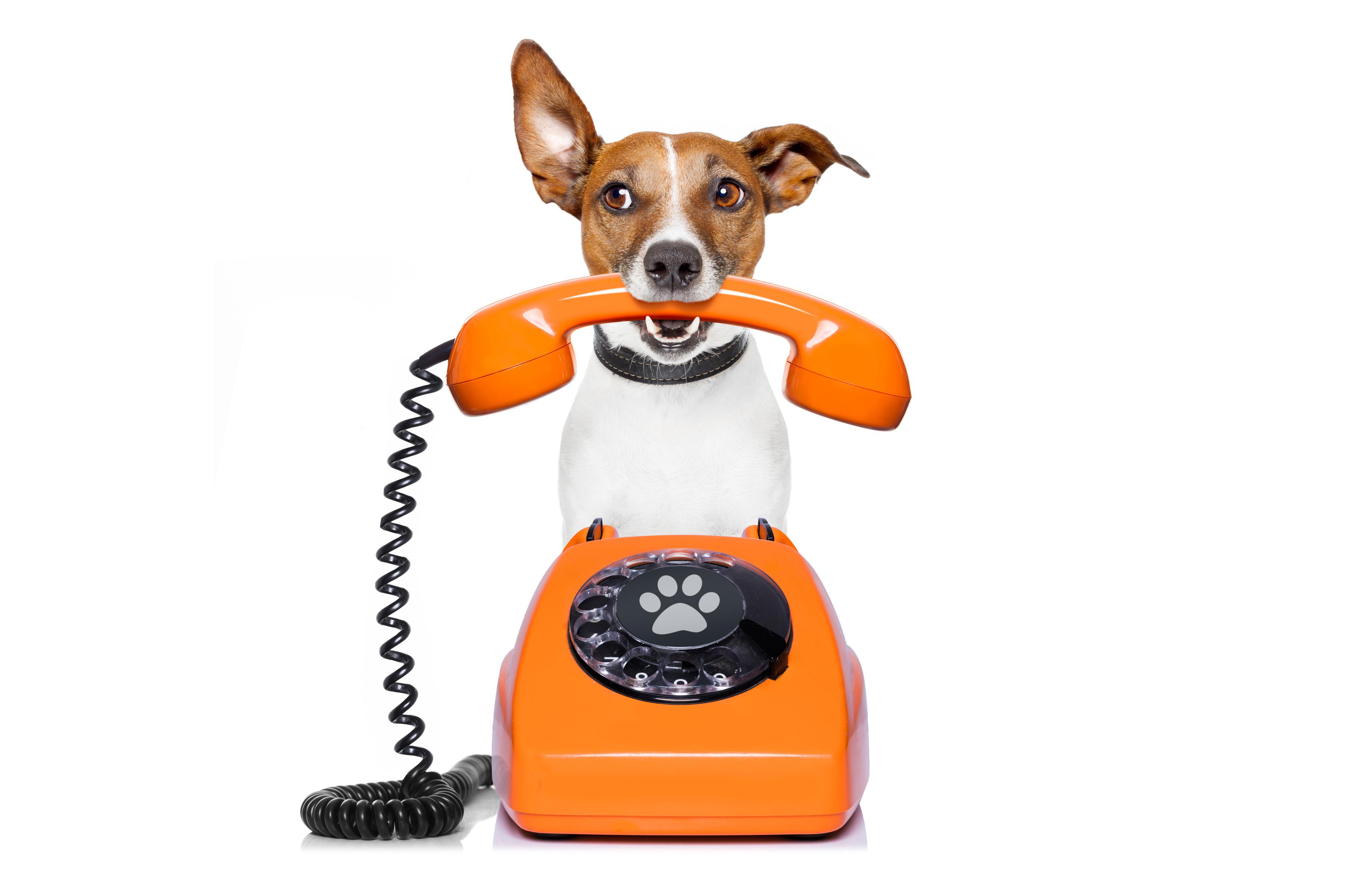 Dog Training by PHONE
