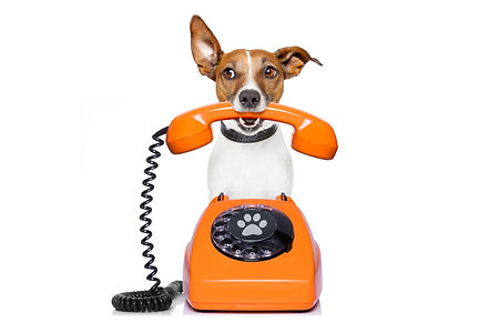shutterstock_510735484-dog_phone-l.jpg
