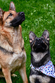 Canine investigative behavior