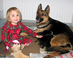GSD_puppies_200_08Dec02