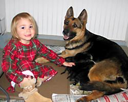 GSD_puppies_200_08Dec02