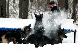 ct-german-shepherd-dogs-snow-27