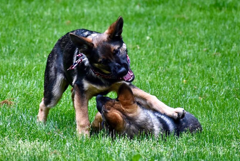 puppy_behavior_DSC_5813.jpg