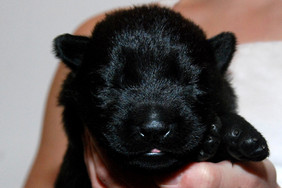 days old