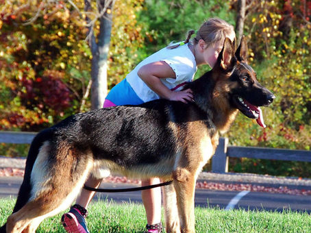 German Shepherd Dog Coat Colors