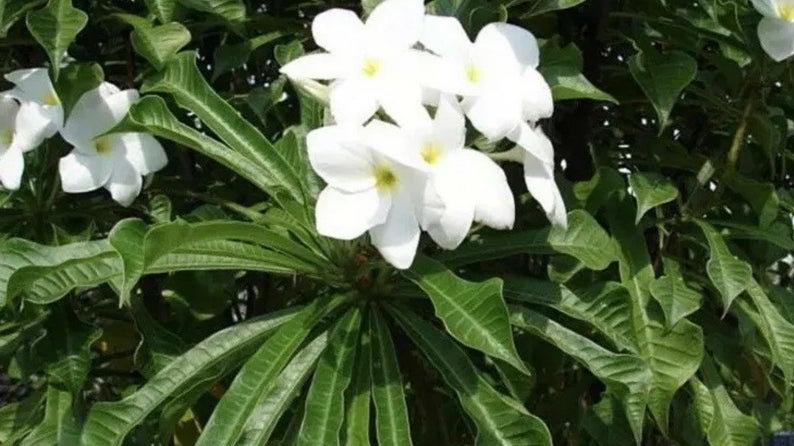 Bridal bouquet cut