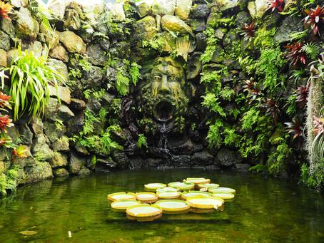 Giardini La Mortella – myrttien puutarha