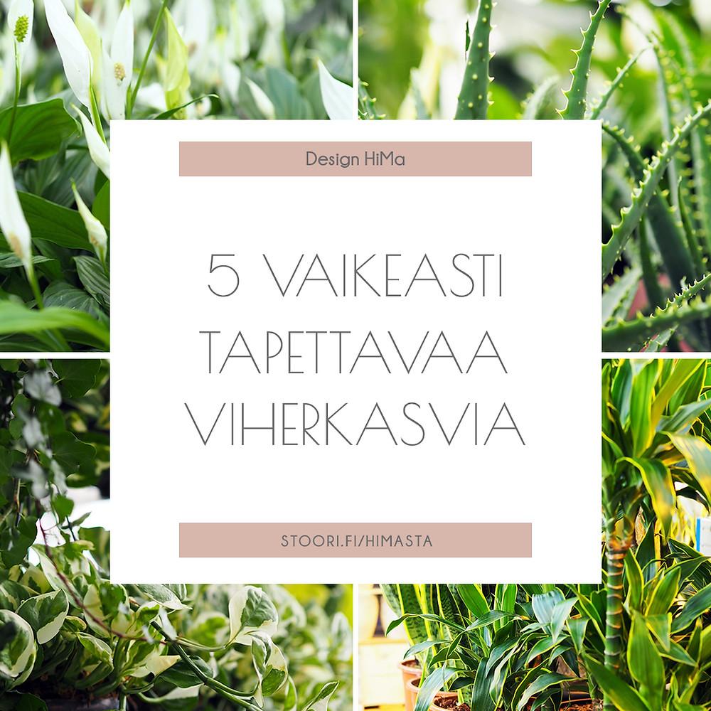 viisi vaikeasti tapettavaa viherkasvia