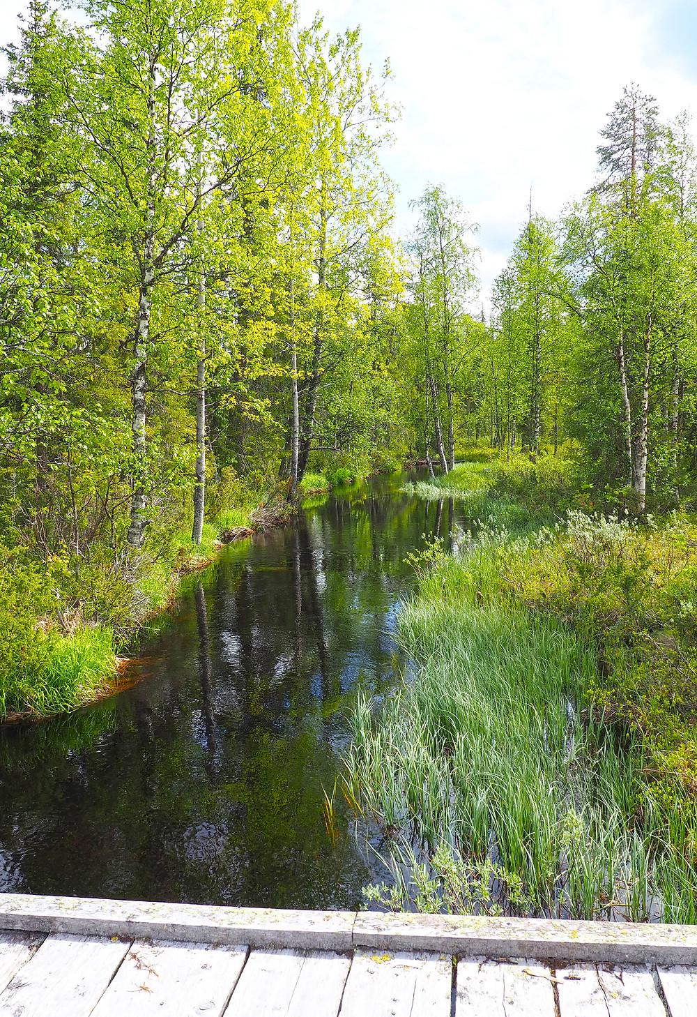 Pyhäjoki Rykimäkeron kierros