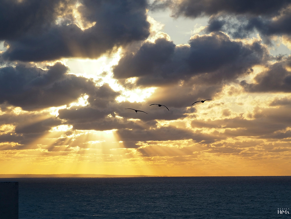 Varadero Kuuba pelikaanit auringonalaskussa