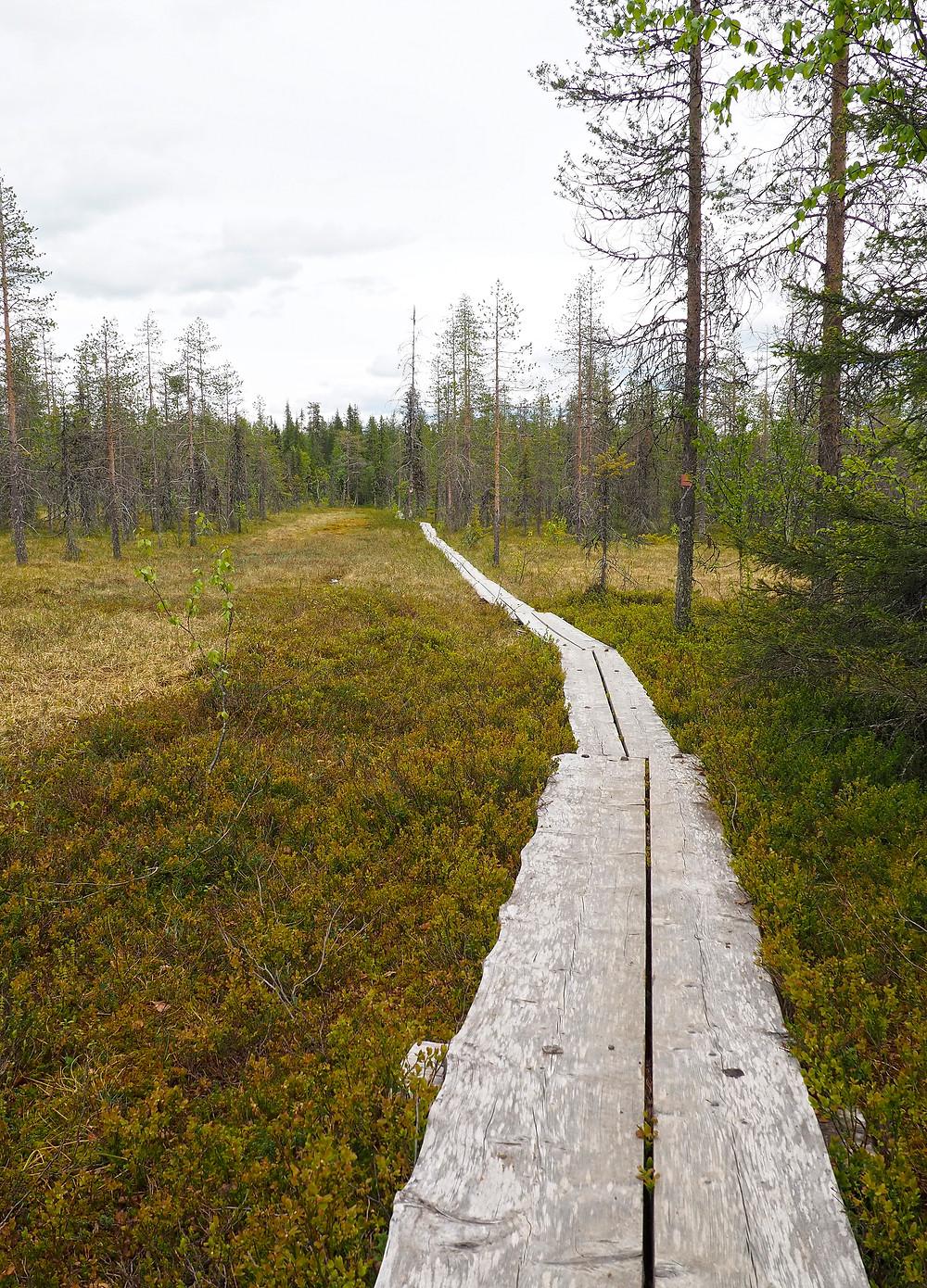 pitkospuut Rykimäkeron reitti Pyhä-Luosto
