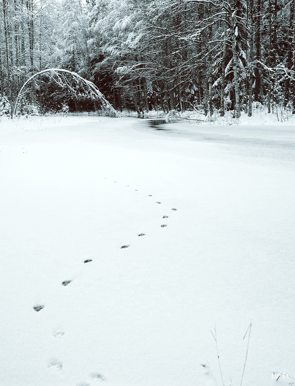 Koskikaran kierros jäljet lumessa